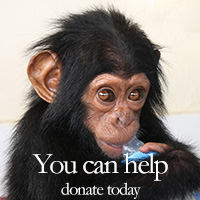 You can help, donate today